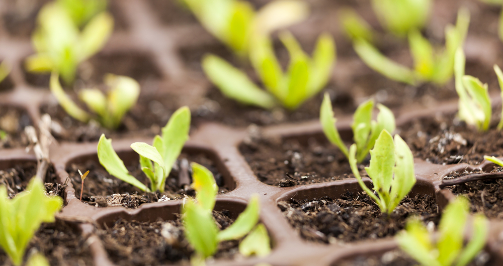 Read how the NFU is working for growers on EU import inspection for plants and plant products