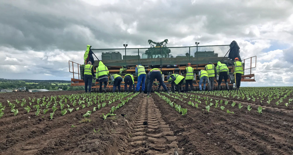 Workers at PDM Salad Growers