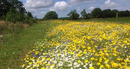NFU Agri-Environment update- July