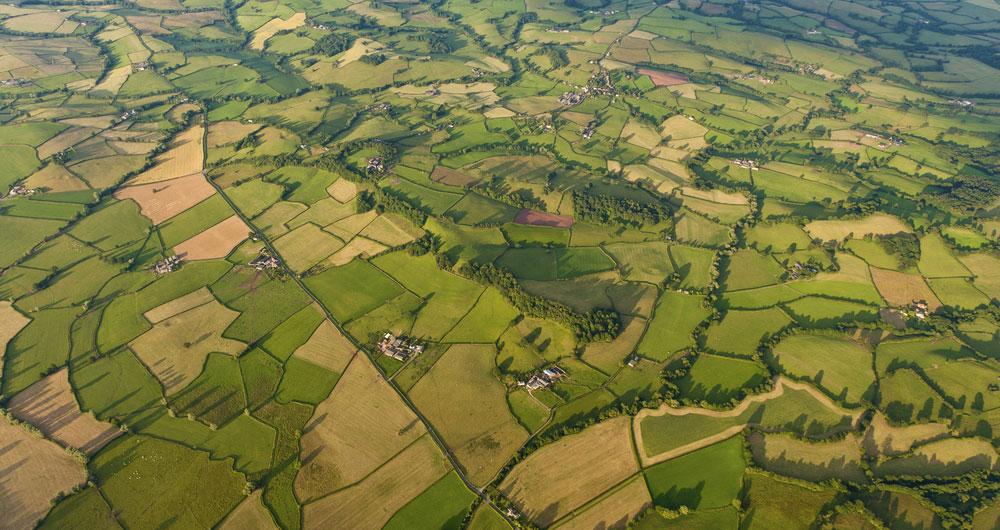 Government launches 'bounce back' plan for agriculture, food and drink industry