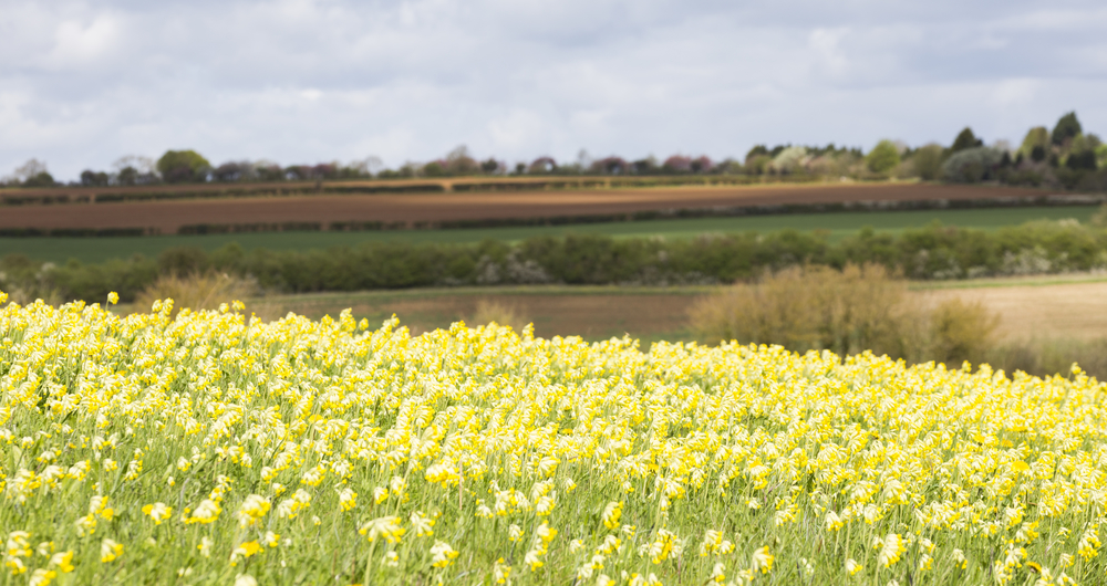 See Defra's principles for payment rates across future environmental schemes