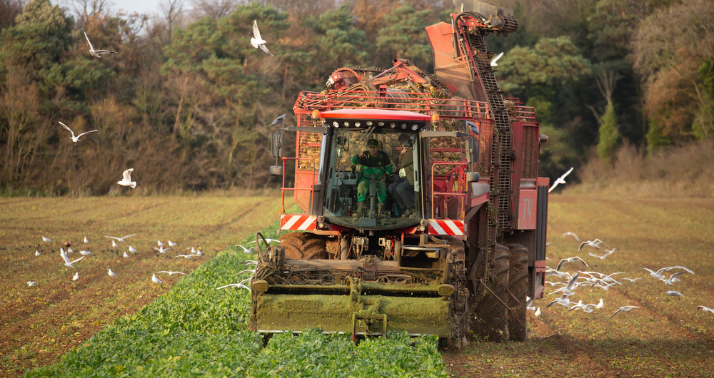 Sugar beet harvester at work