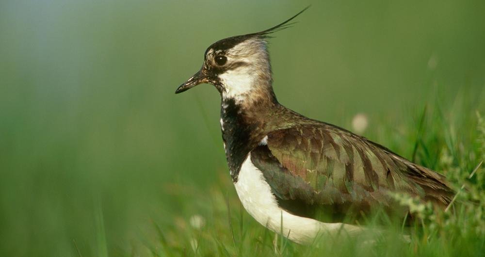 The Habitats and Wild Bird Directive - legislation transposed for 2021