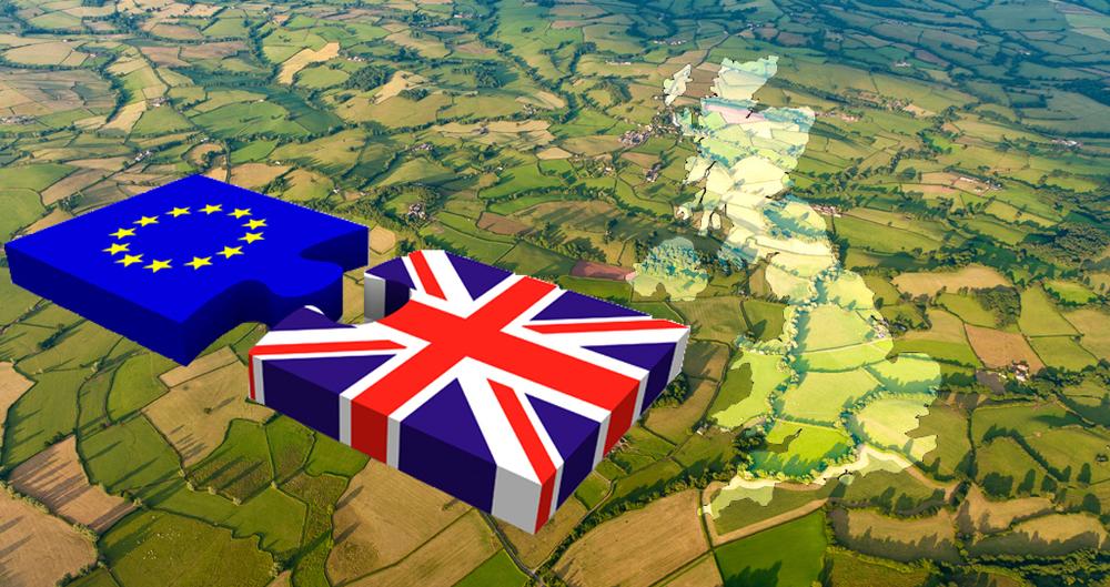 UK EU Exit talks and negotiations