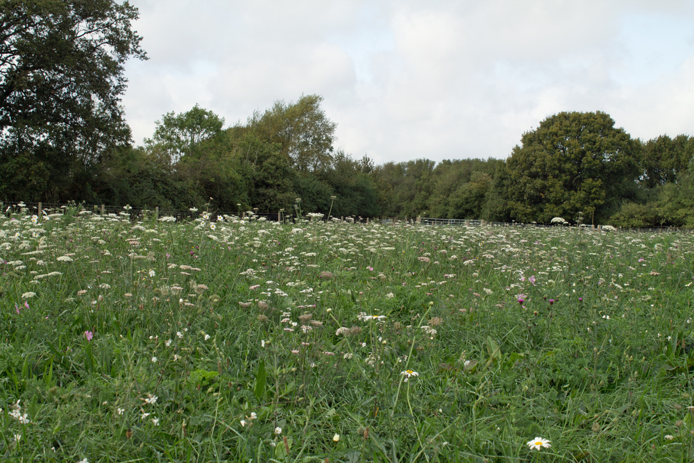 Case study: How mob grazing can help improve wildlife habitats