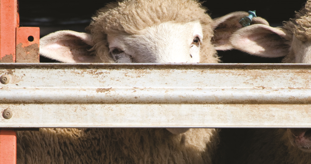 Post-Brexit movement of animals: NFU looks at impact and implications