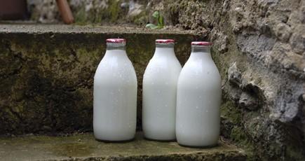 Milk Alternatives: Member Briefing