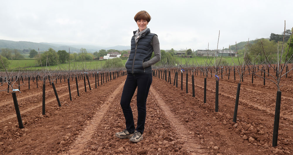 Ali Capper and her team plant new apple trees on her farm