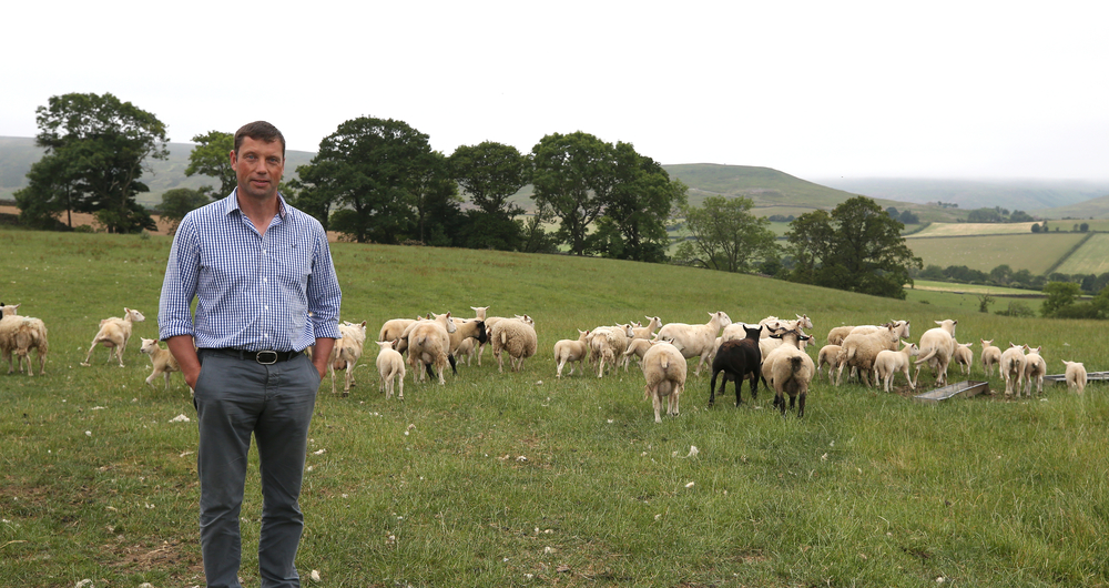 UK-Australia trade deal opinion: Read the response from the NFU livestock board chair
