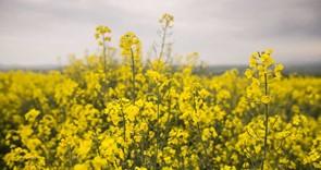 NFU intervenes in EU Bayer hearing on behalf of British farmers