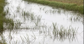 NFU contributes to Defra-commissioned report on surface water flooding