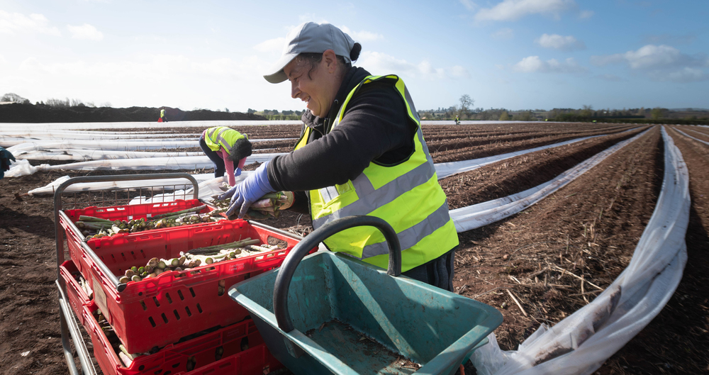 Horticulture businesses: Contact DWP for help with domestic seasonal recruitment