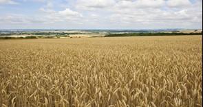 Volunteers needed: NFU pilot project on nitrogen use efficiency
