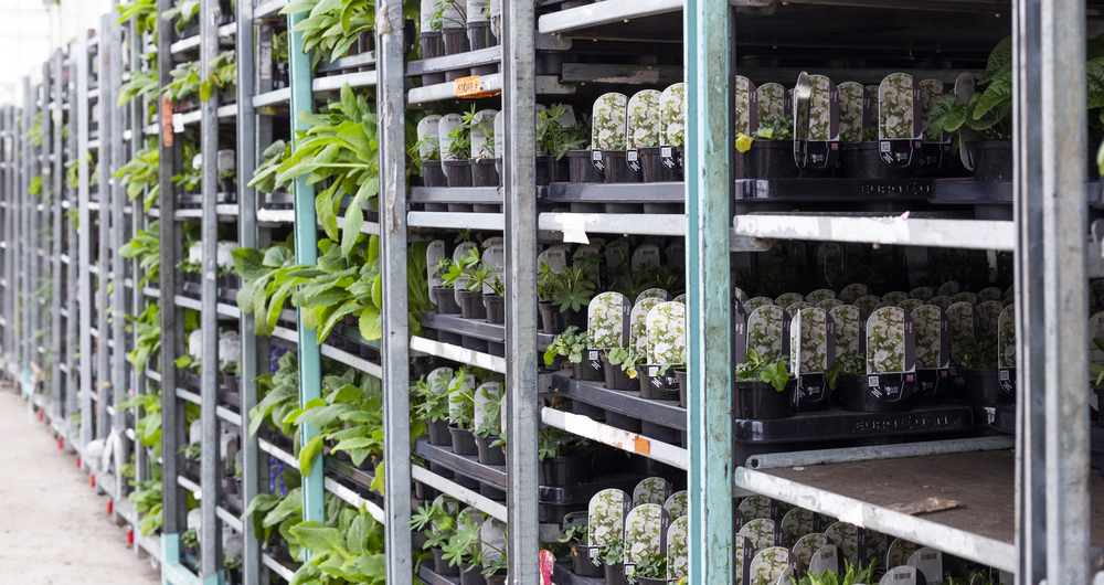 Free webinars for traders of plants/plant products between GB and the EU/NI