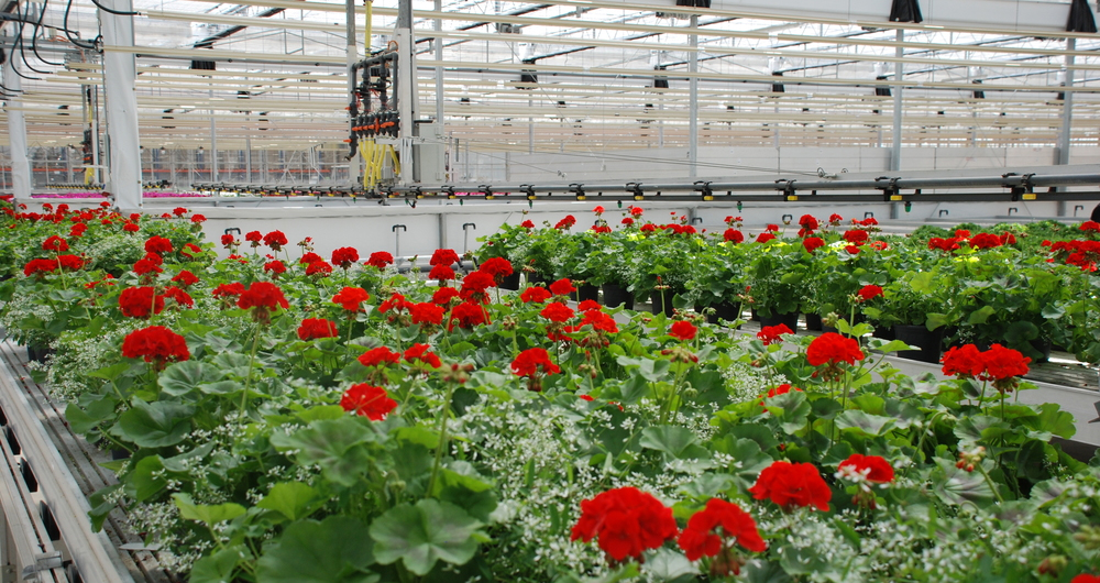 'Place of destination' checks on EU imports of plants and plant products from 1 January 2021