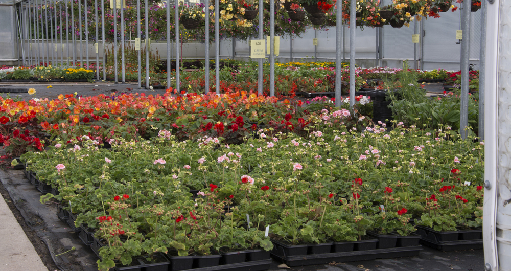 Movement of British plants and plant products to Northern Ireland eased