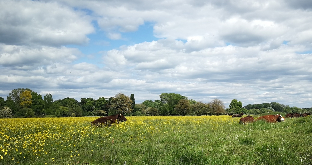 SSSI condition assessment consultation - read the NFU's response