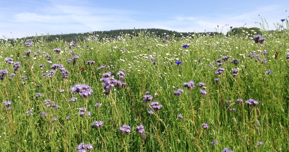 Defra consults on Local Nature Recovery Strategies