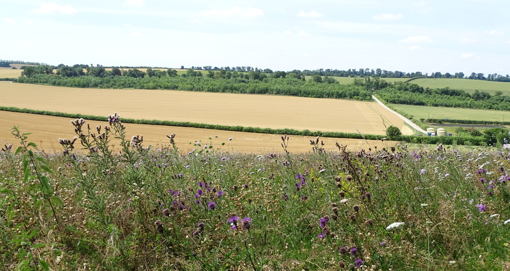 Countryside Stewardship Facilitation Fund to reopen in December