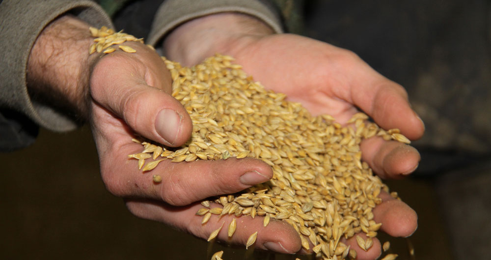 Grain contracts: What are the risks if there's a messy end to the transition period?