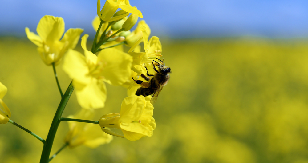 Review of recent study into pesticide effect on bee mortality
