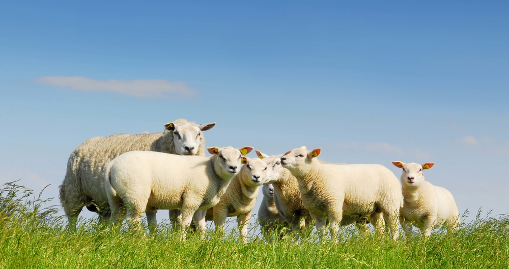New scheme launched to support assurance in British halal meat