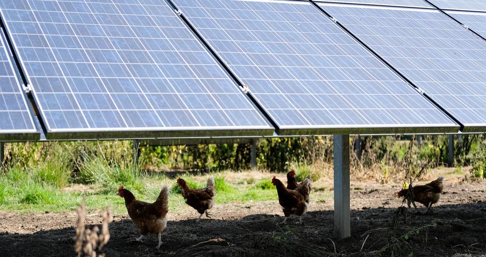 Blog: Solar farms and the British landscape