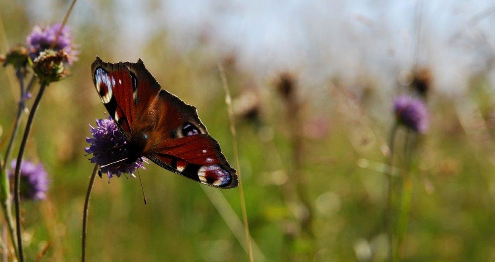 NFU submits evidence on Biodiversity and Ecosystems