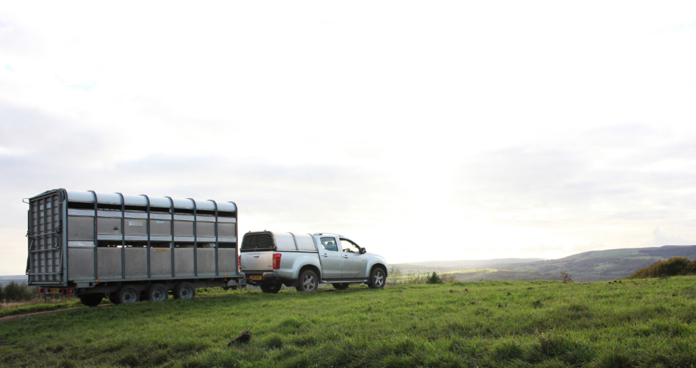 NFU survey seeks information on livestock and poultry transport and fitness to travel