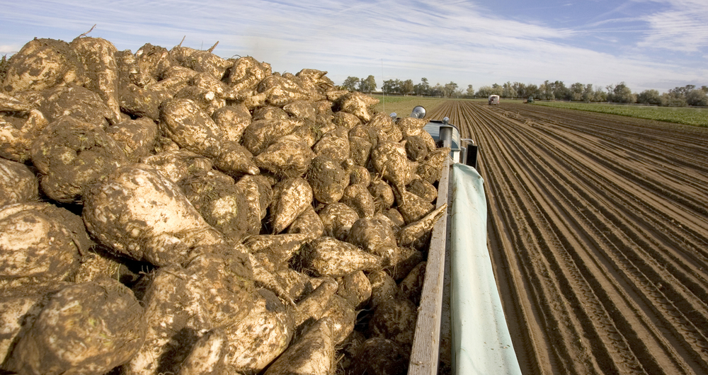 Protecting the sugar beet crop in 2022 and beyond