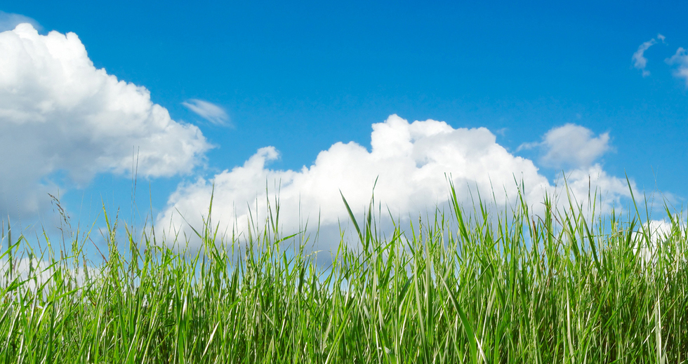 A green field on a bright blue sunny day