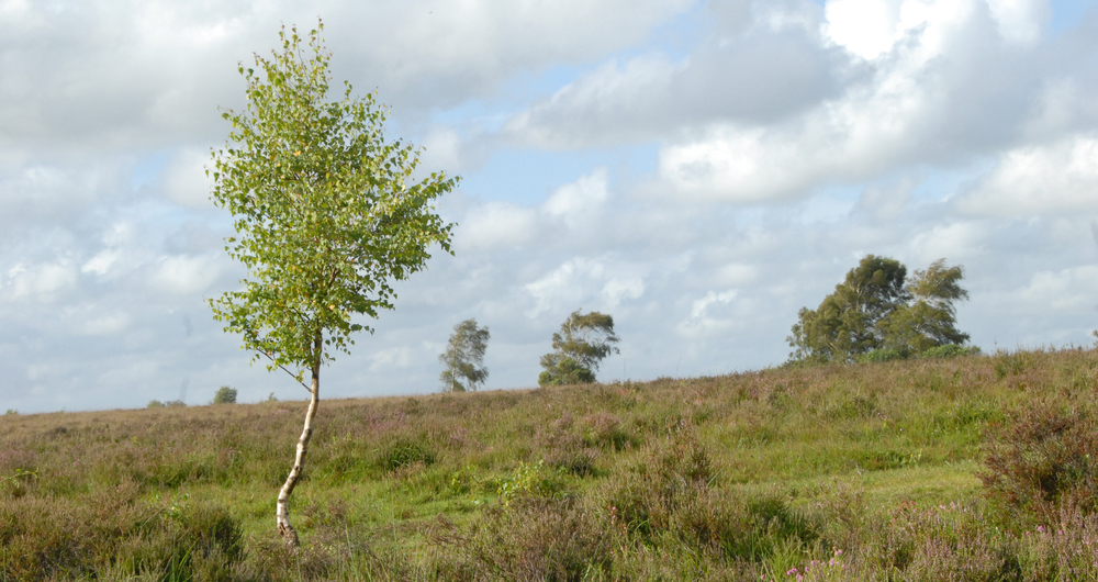 BPS: Read our common land update