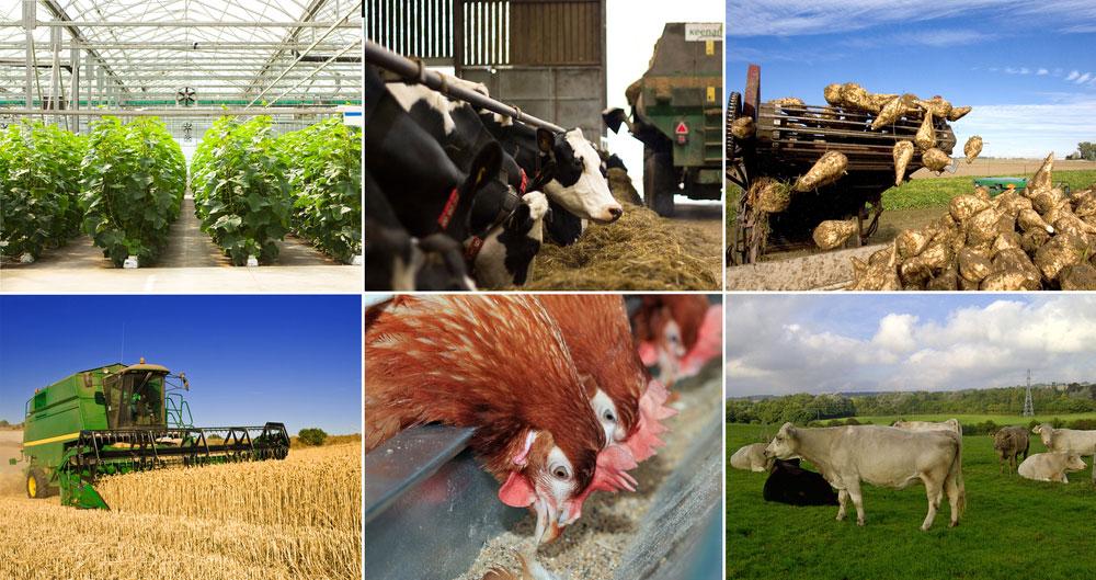 farming sectors