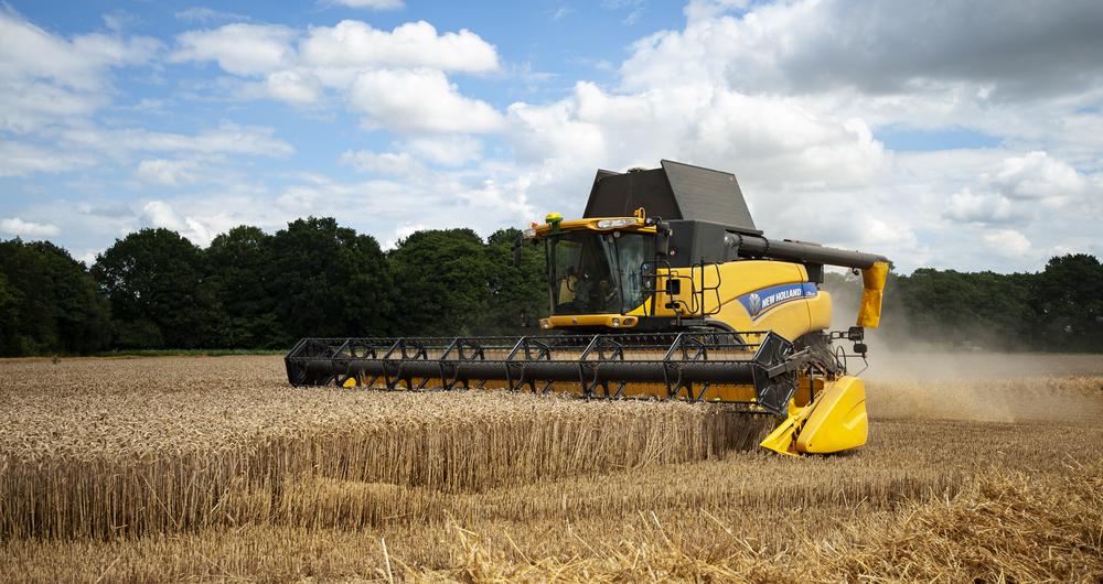 Spring wheat harvest 2021
