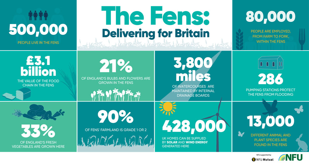An infographic of food and farming in the Fens