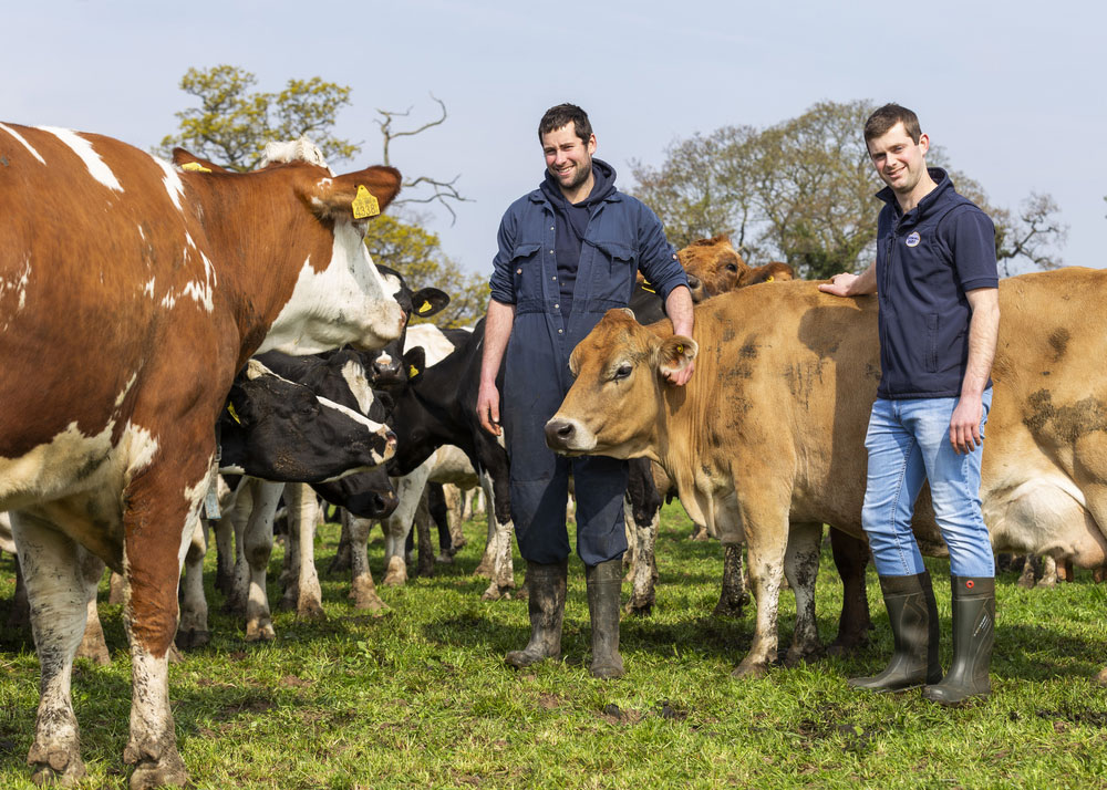Henry and Rob Cooke, Clotton Hall Dairy, with Jersey, Danish Red and Holstein Friesian cows