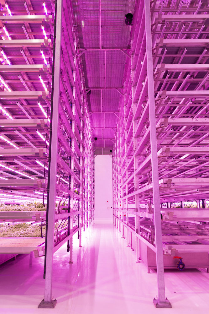 Vertical Farming - crops growing under LED lights in a warehouse.