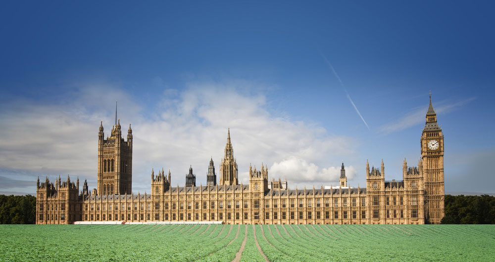 The palace of Westminster is set in a farmed field