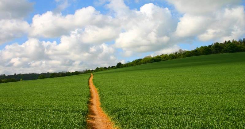 Footpath through a field