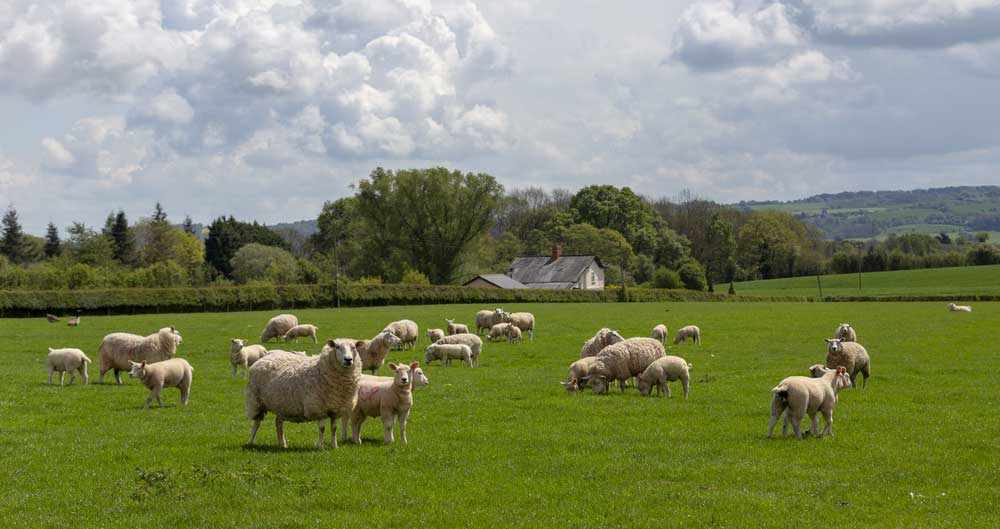 Why retailers should back British livestock farmers this spring