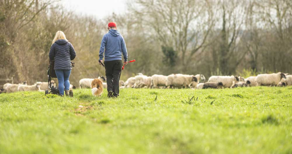 NFU's plea to dog owners after horrific sheep attack in Essex