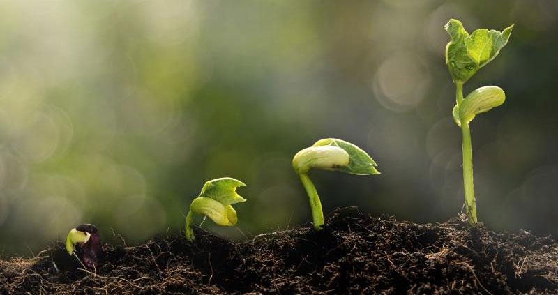 Green shoots, spring, soil, growth