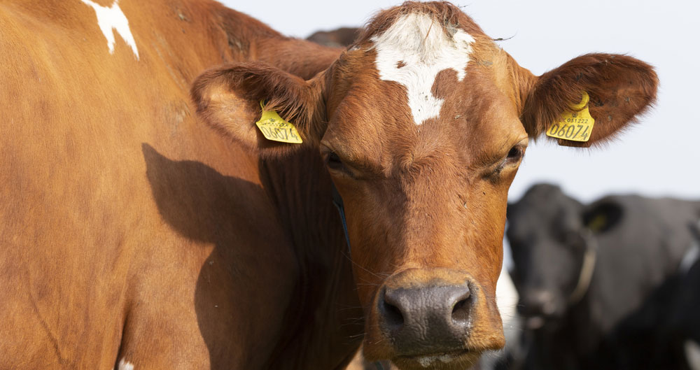 Email your MP on bTB in cattle