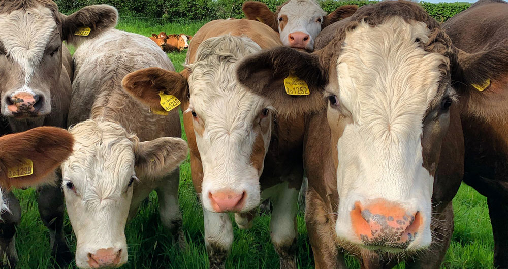 From the farmer's mouth: Meat, myths and climate change