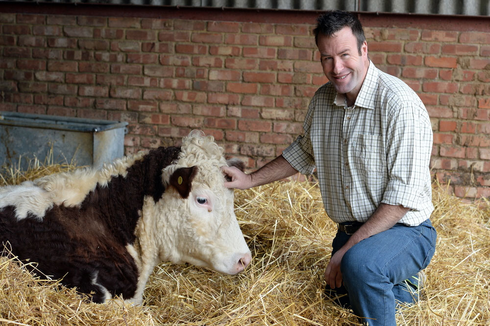 NFU Vice President Stuart Roberts pictured on farm with cattle