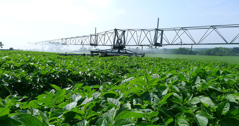 An image of a field of crops being sprayed with water