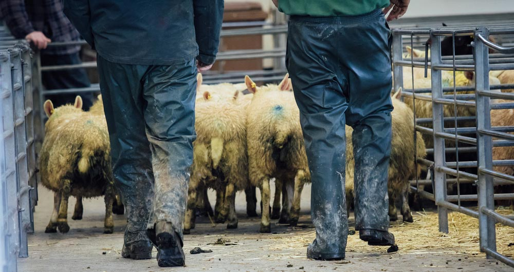 General Election 2019: Question time on NFU members' farms