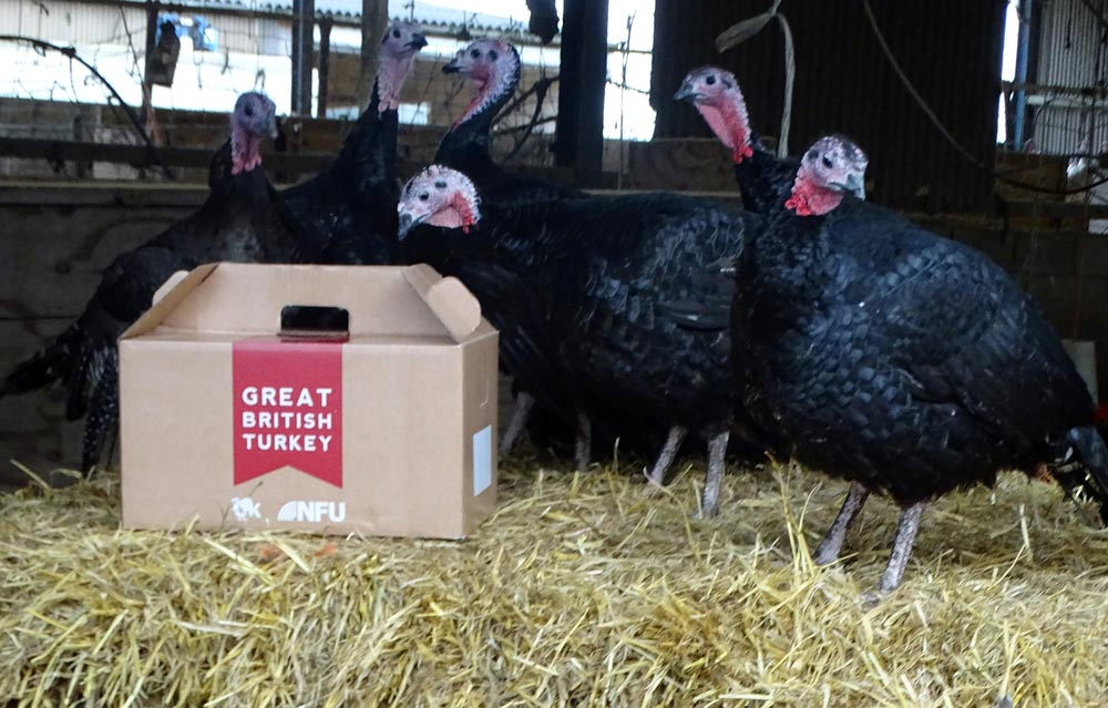 Supporting the #Buymyturkey campaign