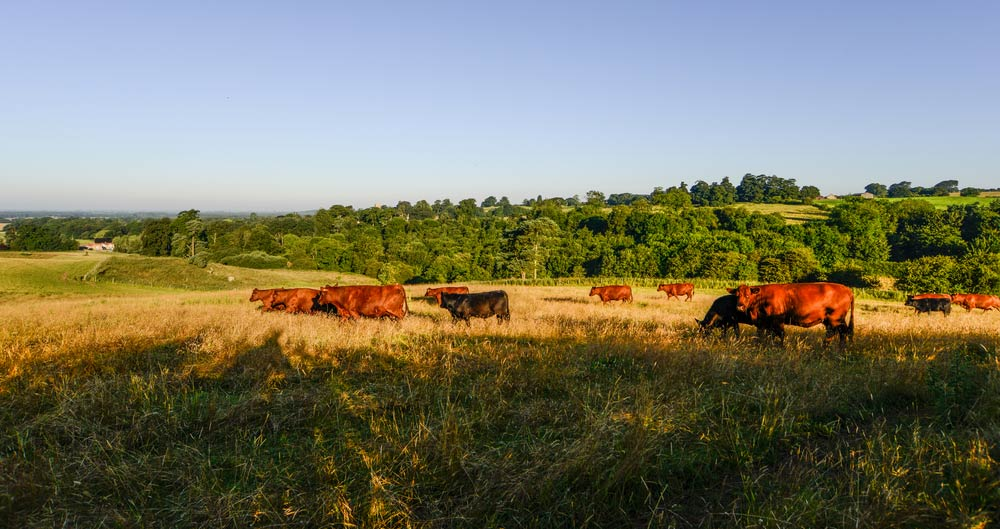 Read now: British farming's strong message on climate change