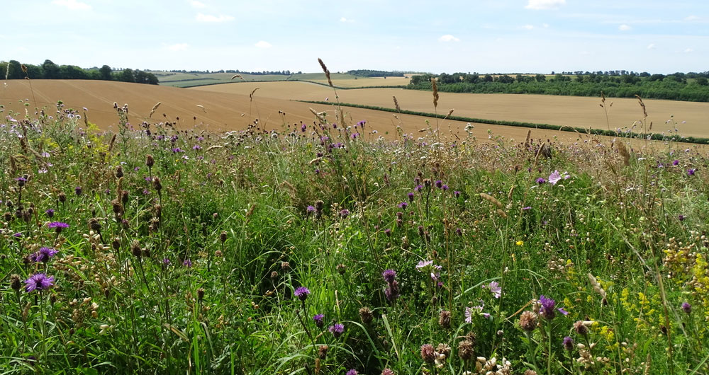 Future-proofing the arable rotation